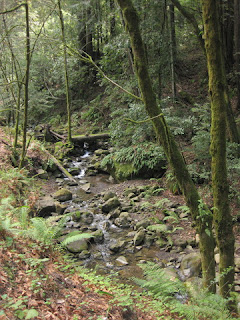 Creek flowing along Eureka Canyon Road above Corralitos, CA