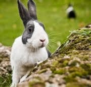 Rabbit Awareness Week