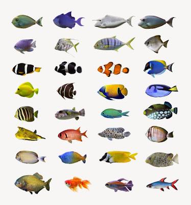 koleksi gambar ikan hias