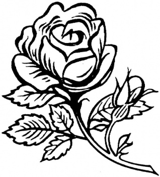 Rose flower coloring page pictures Coloring