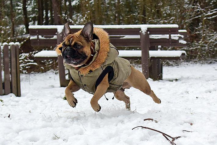 Hunde im Schnee