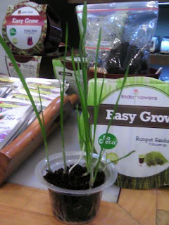 Easy Grow Kit Rumput Gandum
