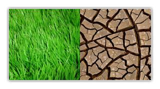 تأثير التلوث على الكائنات الحية Grass_by_conformity