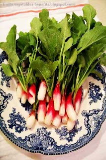 benefits_of_eating_radishes_fruits-vegetables-benefits.blogspot.com(benefits_of_eating_radishes_12)