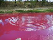 O rio santa cruz do capibaribe em PE tornou se escoamento de sofrimento provido do sangue