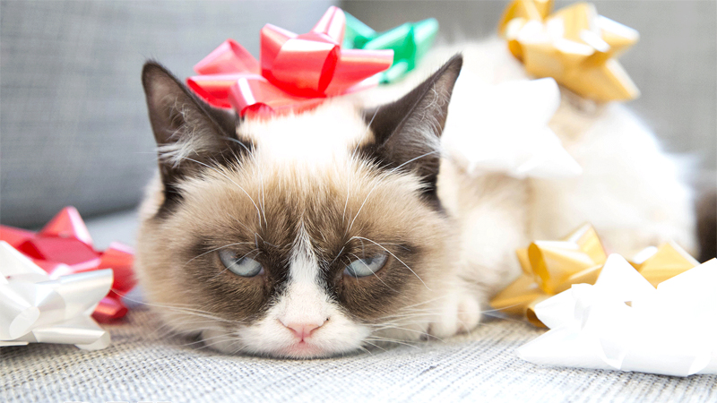 Grumpy-Cat-Humbug.jpg