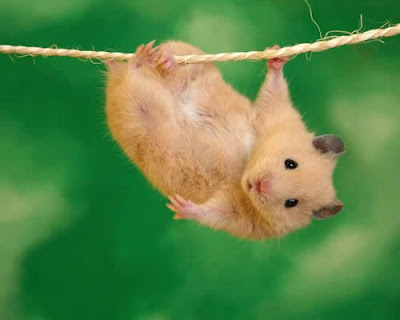 Cute animal hanging from washing line