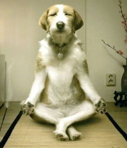 funny dog meditation