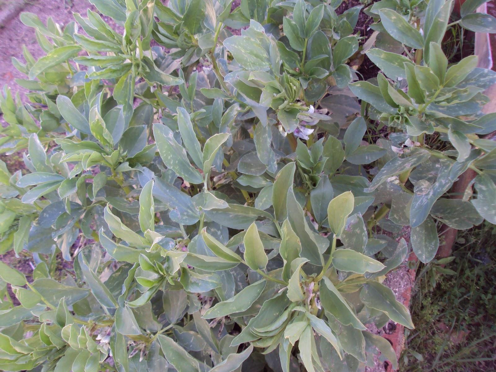 En torno al huerto distribuir las plantas en las - Jardineras huerto urbano ...