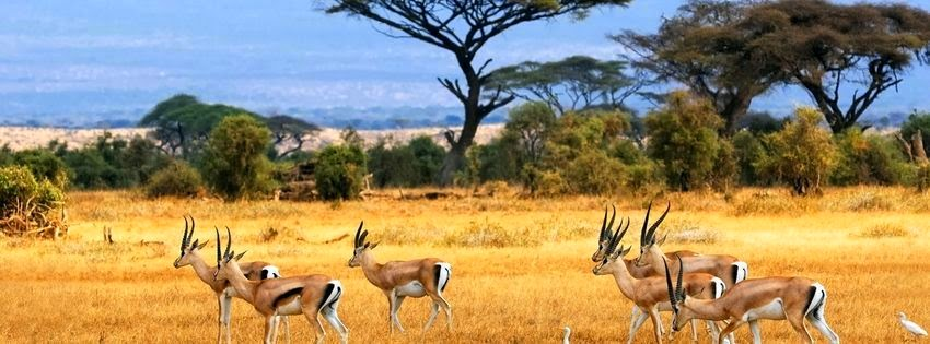 Couverture pour facebook afrique