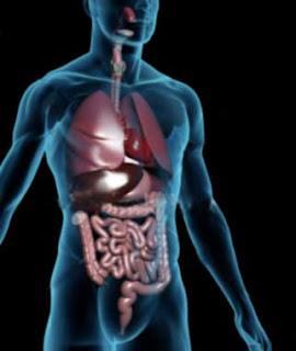gambar anatomi tubuh