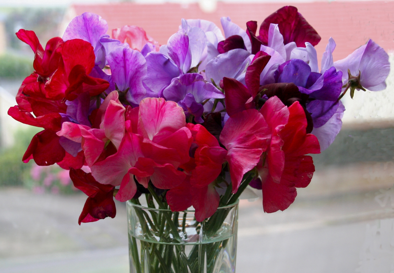 1000 images about Sweetpeas on Pinterest