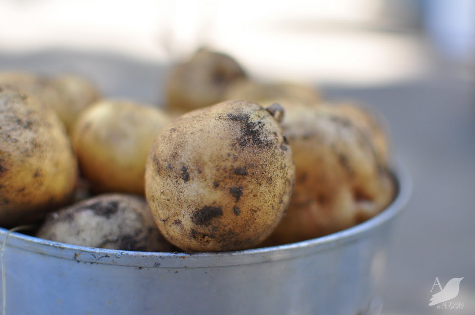 Buy Potato Grow Potato Eat Potato Plant Eat Potato Plant