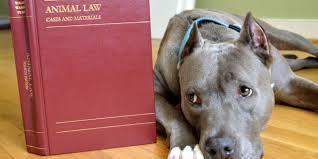 per un vero consenso informato nella veterinaria