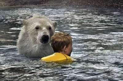 Swimming with Polar Bears | Shocking Polar Bear Photos Seen On www.coolpicturegallery.us