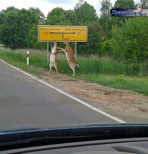 funny animals deers picture
