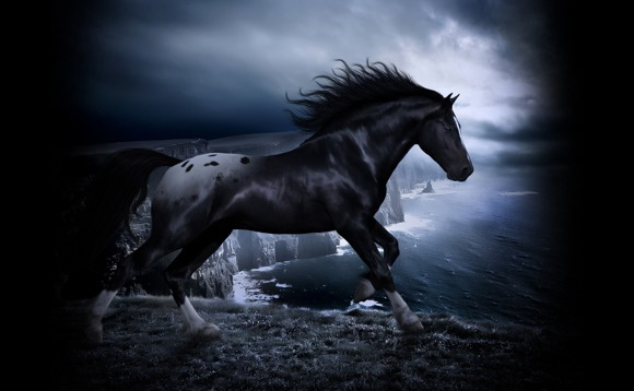 Horses Photo Art Wallpaper 07