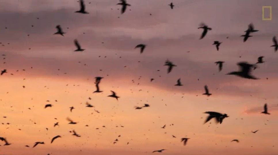 http://video.nationalgeographic.com/video/news/140519-peru-ballestas-vin?source=relatedvideo