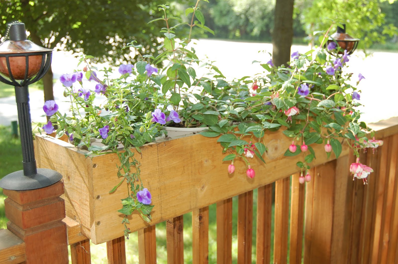 The green caterpillar in the garden deck planters for Garden decking planters
