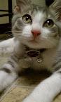 Cat #1: