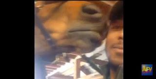 Tipo besa un caballo y el caballo lo besa pa tra