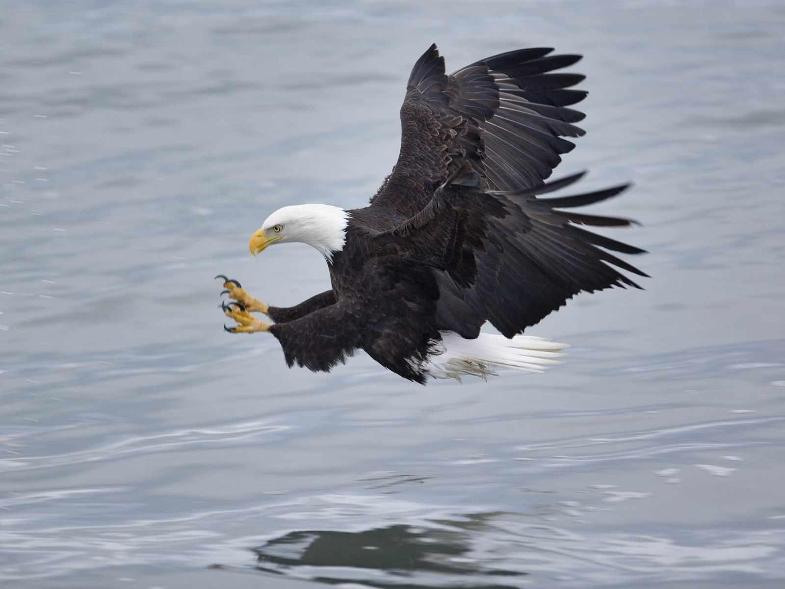 Zoom Dise 209 O Y Fotografia Imagenes De Aguilas Fondos