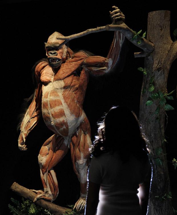 Mostra de anatomia de animais dissecados - Oferta de Trabajo en ...