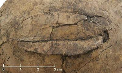 «Eγκλήματα πολέμου» ηλικίας 7.000 ετών