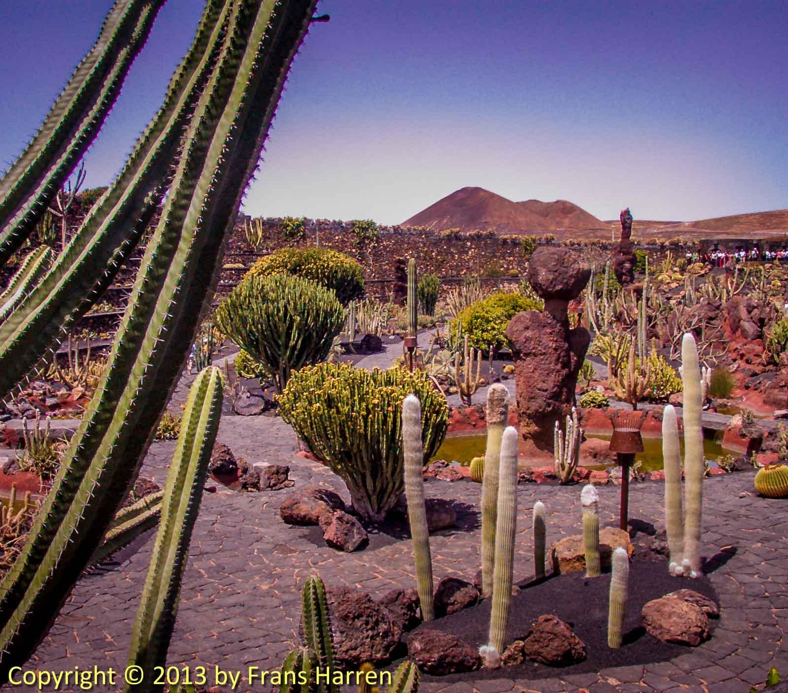 Jard n de cactus frans harren photography for Jardineras de cactus