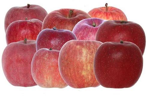 dünya elma çeşitlerimiz
