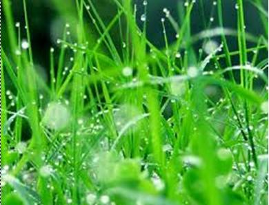 Manfaat Air Embun Untuk Kesehatan dan Kecantikan Wanita