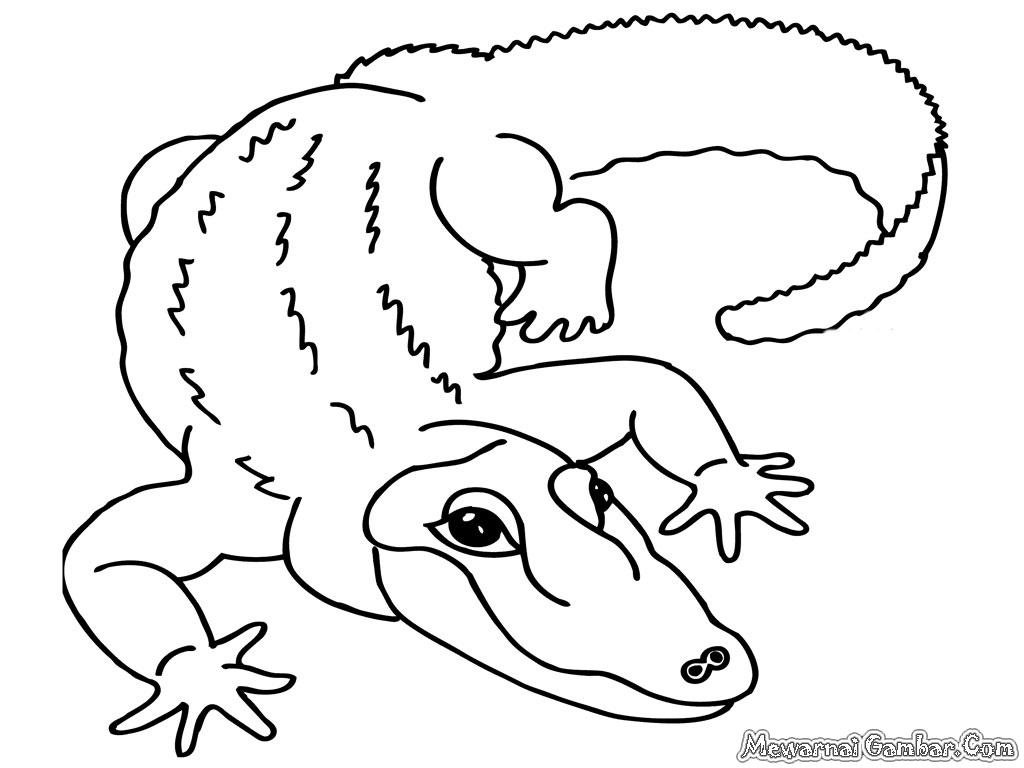 19 Image Gambar Mewarnai Binatang Kartun Buaya Sketsa Download