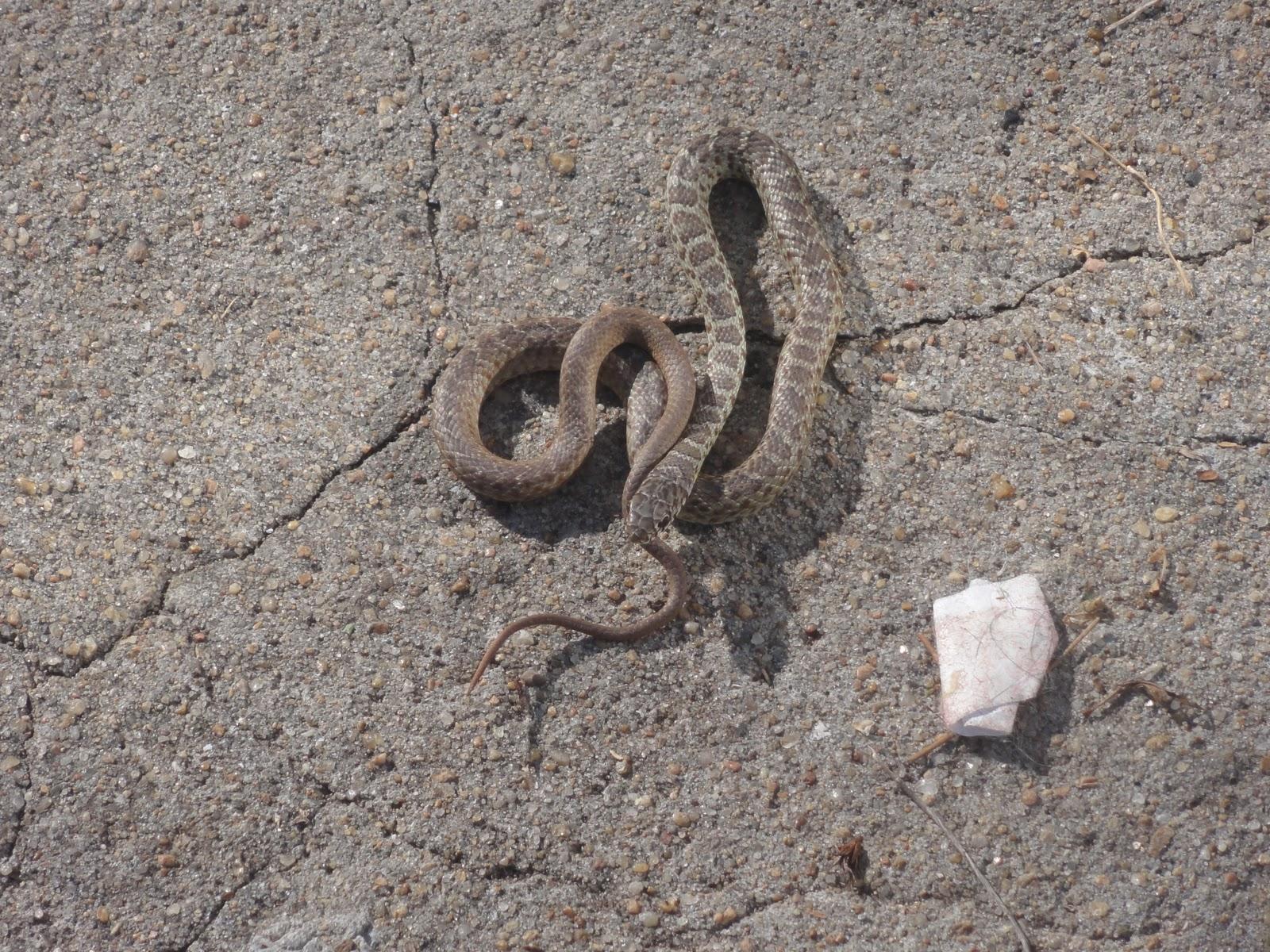 The Fearless Farm Frau Snakes A Farm