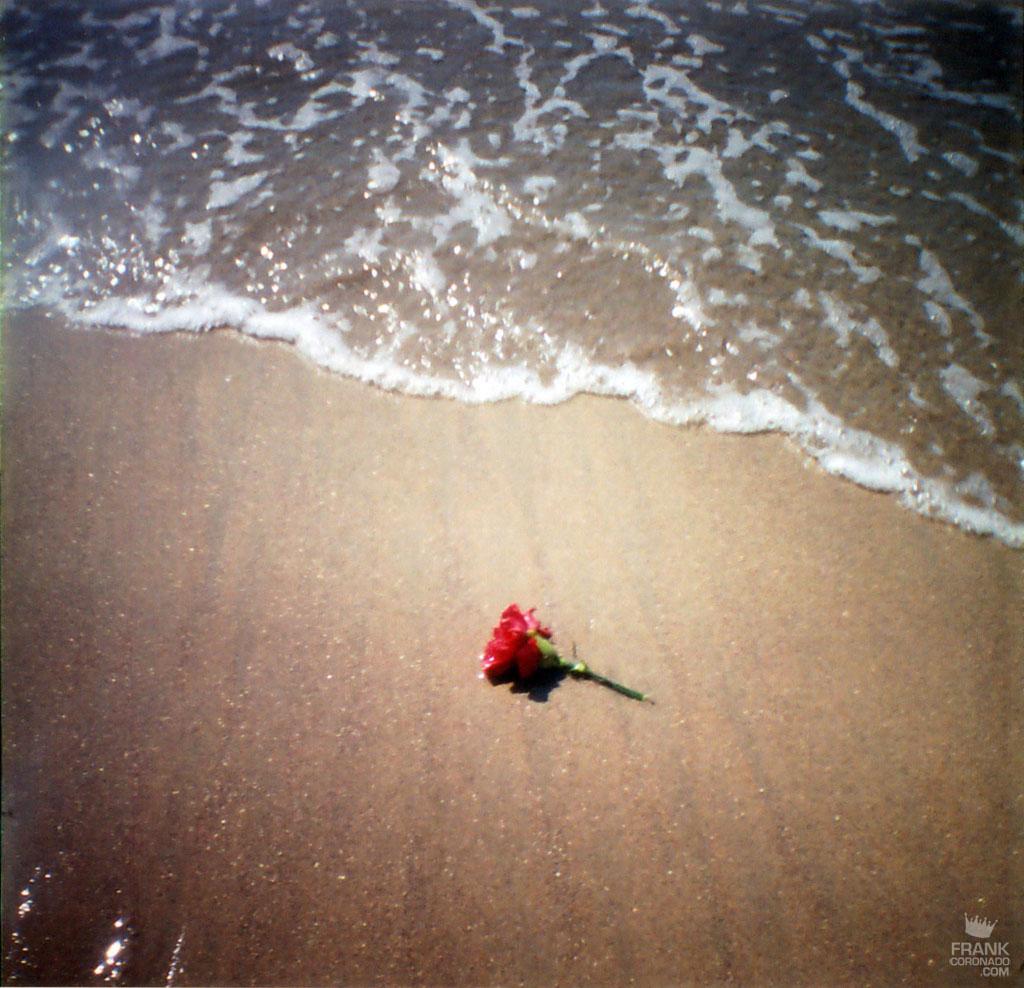 flor en la playa de oaxaca