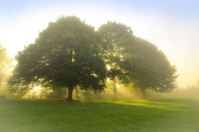 Cahaya Matahari di Pagi Hari di Ronchamp Perancis