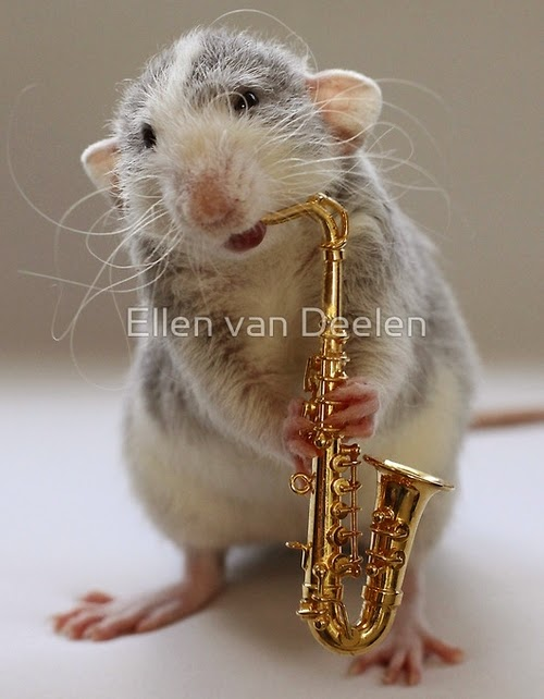 14-The-Saxophone-Player-Musical-Dumbo-Rat-Ellen-Van-Deelen-www-designstack-co