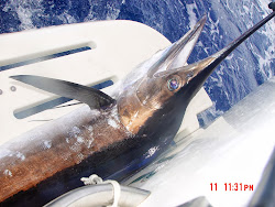 Beautiful Marlin