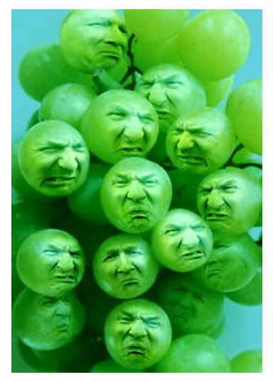 Image result for sour grapes