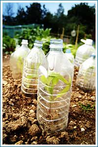La regadera verde reciclando for Materiales para la construccion de un vivero