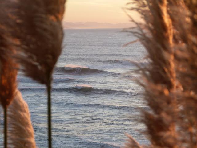 surfin estate blog surf culture surfboard lifestyle skateboard once côte des basques