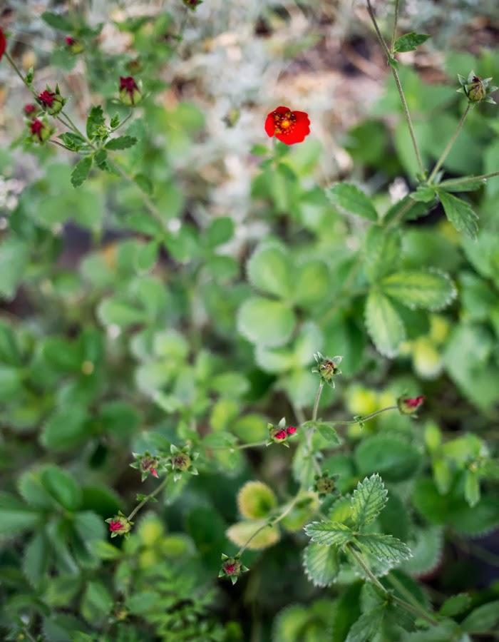 www.gretchengretchen.com photo by Kreetta Järvenpää