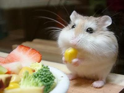 Cute mouse - fare