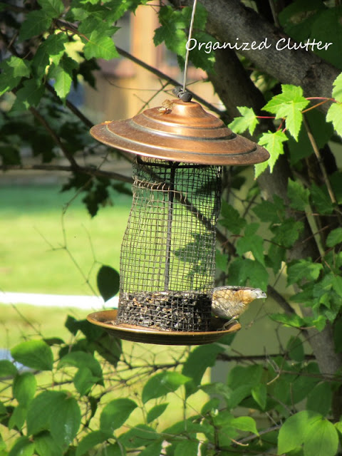 Black Oil Sunflower Small Birdfeeder