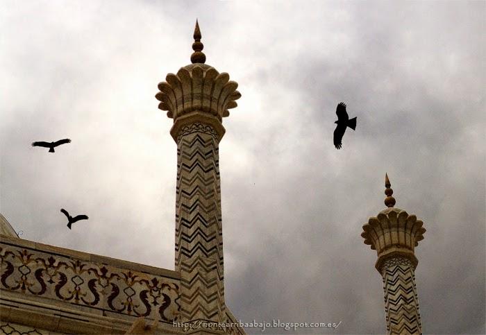 Milanos negros sobrevolando el Taj Majal