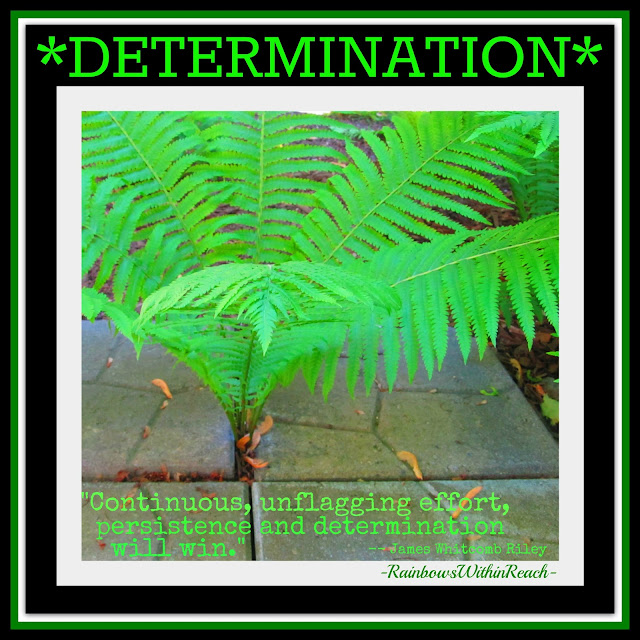 photo of: DETERMINATION: Fern Emerges -- quotation on determination and persistence