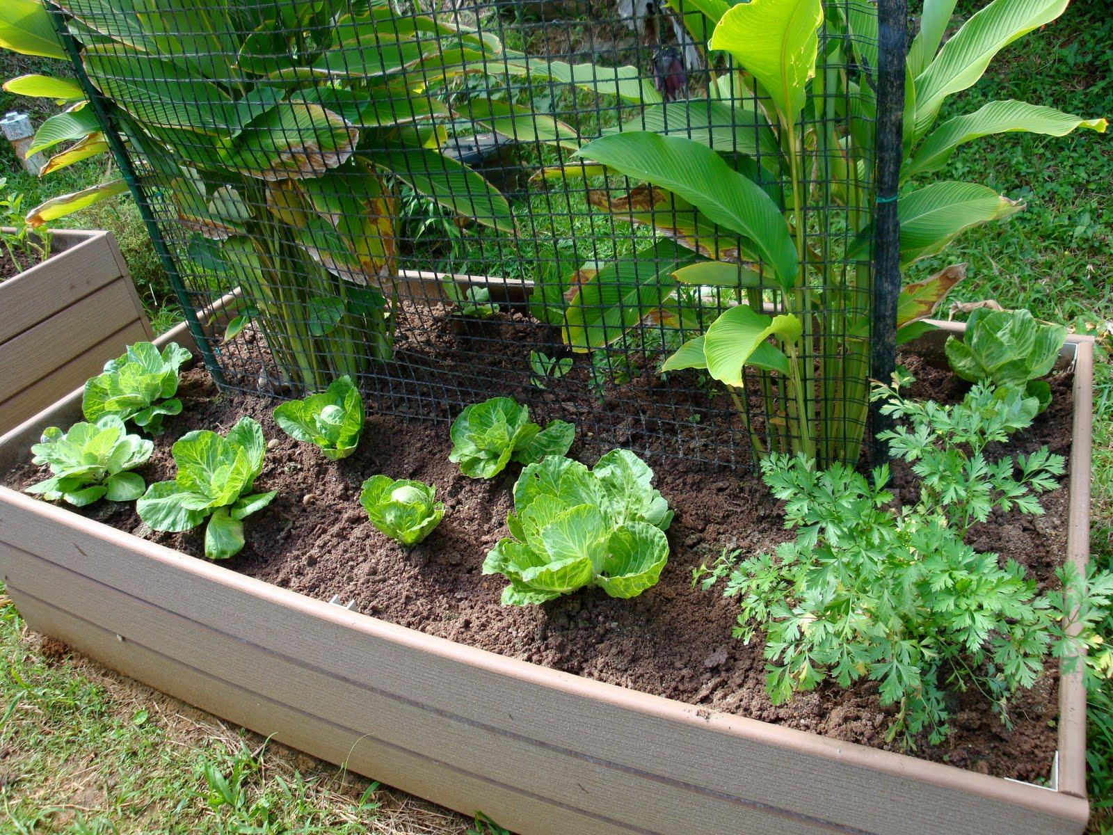 Garden Center Ejea: Como hacer una huerta en casa