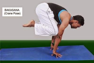 Bakasana or crane pose how to do it and its health benefits.