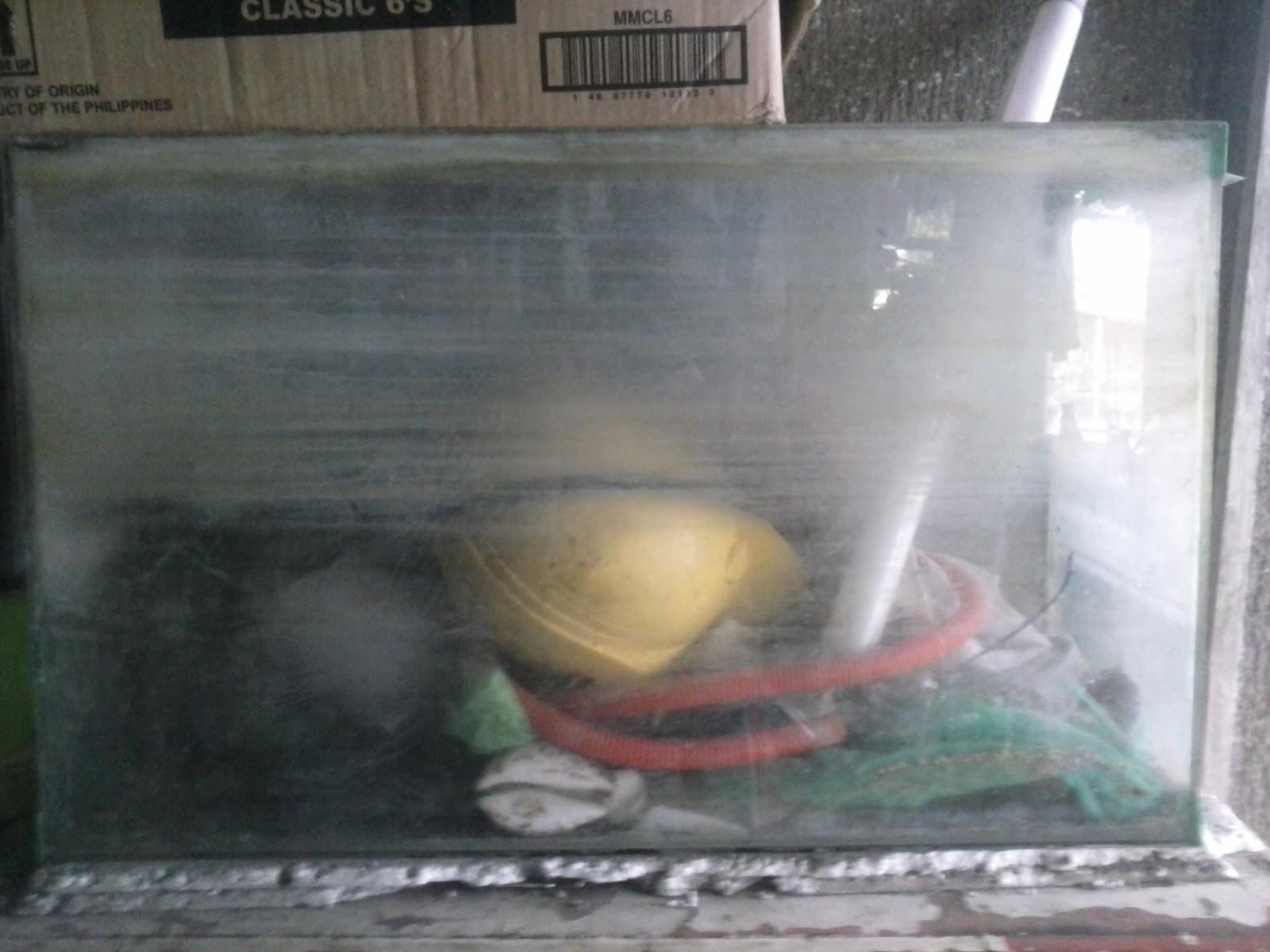 Cleaning Aquarium Glass | Aquarium Academy