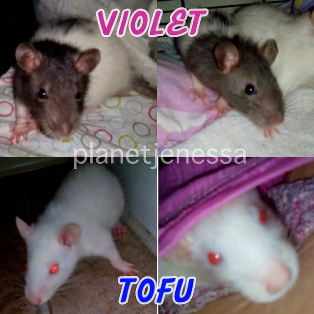 VIOLET & TOFU