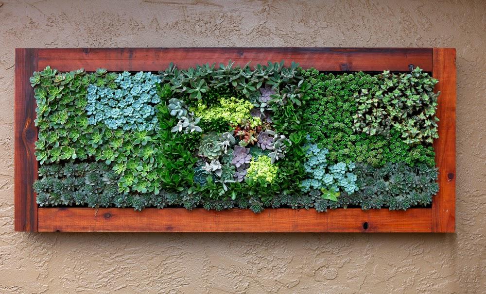 Succulent living wall treatment